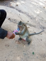 Monkeys have to hydrate too