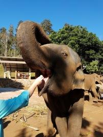 Elephants like to eat. A lot.