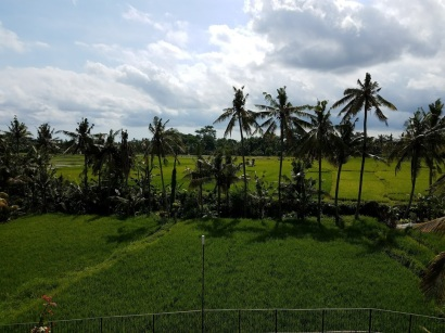 View of the quintessential Balinese rice paddies from our room.