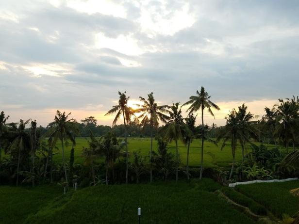 Sunset over the paddies.
