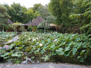 Gorgeous lotus plants (or water lillies?) outside the lobby. Everything was open air and so peaceful.