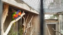 Our favorite bird friends.