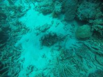The sea floor near the GBR. Fantastic!