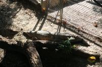 Croc!!