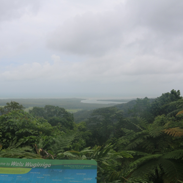 Daintree overlook