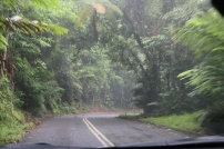 Driving in the Daintree Rainforest
